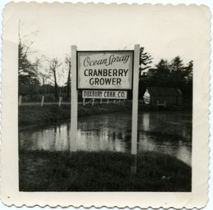 Thumbnail of Duxbury Cranberry Company: Sign 'Ocean Spray Cranberry Co. / Duxbury Cran. Co.'             on Rte. 14 near pump house