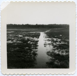 Thumbnail of Duxbury Cranberry Company: bogs flooded in winter