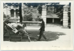 Thumbnail of Ox pulling cart in French Quarter