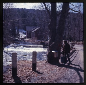 Thumbnail of Checking sap buckets while sugaring, Montague Farm Commune