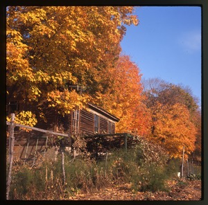 Thumbnail of House and arbor in fall color, Montague Farm Commune