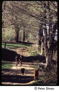 Thumbnail of Dogs and woman walking down a dirt road, Tree Frog Farm commune