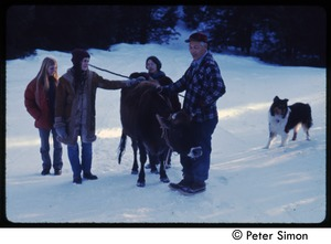 Thumbnail of Older man with cow, collie, and commune women in the snow, Tree Frog Farm commune