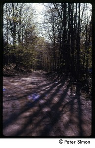 Thumbnail of Tree shadows on a dirt road, Tree Frog Farm commune