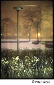 Thumbnail of Street scene, New York City (?),  in heavy snow Street lamp and shrubs under snow (reflected in a window)