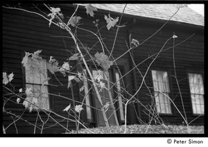 Thumbnail of Hannan house, across the road from the Packer Corners commune, seen through maple seedlings