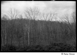 Thumbnail of View of the woods, Packer Corners commune