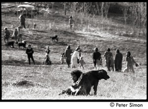 Thumbnail of After the Maypole celebration, Packer Corners commune: leaving the field, with             Marshall Bloom lying in the foreground grass with a dog