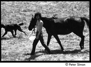 Thumbnail of Marshall Bloom leading a horse through a field, May Day at Packer Corners commune