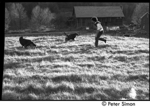 Thumbnail of Peter Gould running through the fields with dogs, Montague Farm Commune