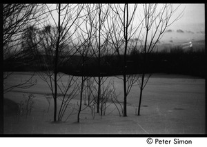 Thumbnail of Copse of trees in the snow at sunset, Tree Frog Farm commune