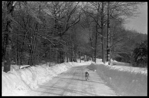 Thumbnail of Dog running down a snow-plowed road