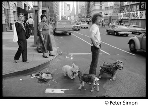 Thumbnail of Dog walker with Schnauzers and a West Highland terrier Crossing the street near 1717 Broadway (the New York Karate Academy)