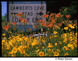 Thumbnail of Daylilies growing in from of sign for Lamberts Cove Road, Marthas Vineyard