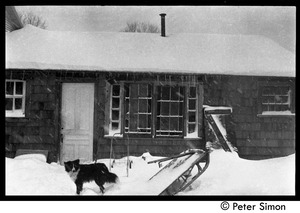 Thumbnail of Dog outside during a snow storm, Packer Corners commune