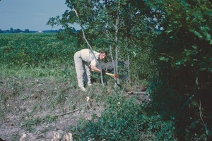 Thumbnail of Unidentified female volunteer clearing brush and trees