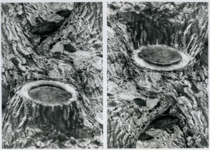 Thumbnail of Branch stump (inverted diptych version)