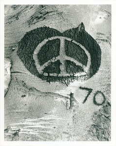 Thumbnail of Peace symbol carved in beech trunk
