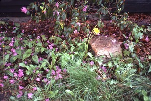 Thumbnail of Wendell Bicentennial slide show Azalea and ground cover in a garden