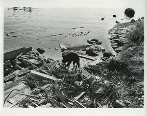 Thumbnail of Dog by polluted waterway