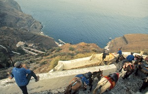Thumbnail of Mules on Greek Island