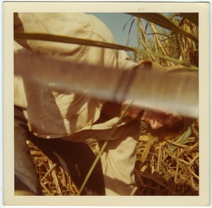 Thumbnail of Jamie Lasalle cutting cane (close-up)