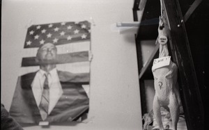 Thumbnail of Young Americans for Freedom (YAF) office: rubber chicken hanging in             front of poster of William F. Buckley