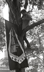 Thumbnail of Gay liberation demonstration at Cambridge Common: man hanging Gay Liberation Front flag