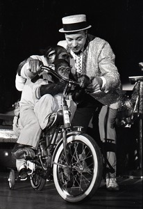 Thumbnail of Chimpanzee vaudeville act opening for the Grateful Dead at Sargent Gym, Boston University: performer with pork-pie hat and chimpanzees on bicycles