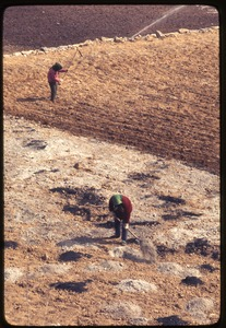 Thumbnail of Women working fertilizer in