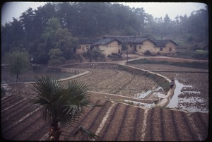 Thumbnail of Fields, terraced, houses (across from Mao's house)