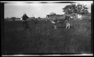 Thumbnail of Reuben Austin Snow, the cross-dressing hermit of Cape Cod, waving a cape in front          of a cow