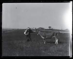 Thumbnail of Reuben Austin Snow, the cross-dressing hermit of Cape Cod, waving a cape in front       of a bored Jersey cow