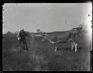 Thumbnail of Reuben Austin Snow, the cross-dressing hermit of Cape Cod, waving a cape in front          of a disinterested Jersey cow