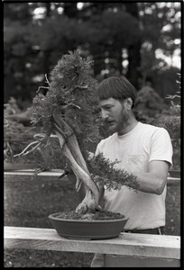 Thumbnail of Man pruning a large bonsai tree