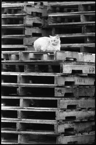 Thumbnail of Cat seated on a stack of pallets, looking left