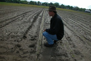 Thumbnail of Lazy Acres Farm (Zuchowski Farm): Allan Zuchowski inspecting the soil in a newly       planted corn field