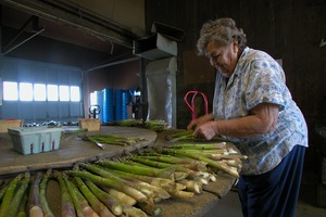 Thumbnail of Hibbard Farm: woman at a round table, sorting and bunching asparagus