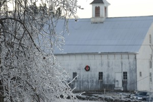 Thumbnail of Ashfield (?) barn, decked out with a Christmas wreath, seen through ice-covered trees