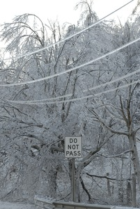 Thumbnail of Trees, powerlines, and 'Do not pass' roadsign covered with ice