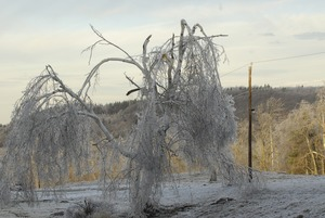 Thumbnail of Damaged and ice-covered tree in an icy landscape