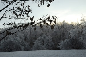 Thumbnail of Sun setting behind ice-covered trees