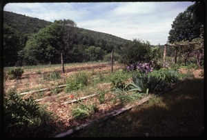 Thumbnail of Garden in mid-summer, Montague Farm Commune