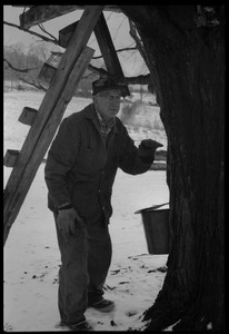 Thumbnail of Rob Ripley tapping maple trees near Montague Farm Commune