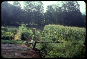 Thumbnail of View across the vegetable garden, Montague Farm Commune