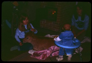Thumbnail of Newborn calf in the living room, Montague Farm Commune
