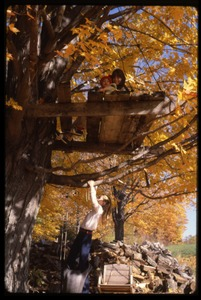 Thumbnail of Children playing in a tree house in the fall, Montague Farm Commune