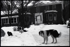 Thumbnail of Cat and two dogs in heavy snow in front of the house, Montague Farm commune
