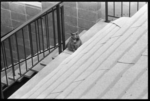 Thumbnail of Long-haired cat staring up at the photographer on the roof