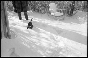 Thumbnail of Cat trudging through heavy snow